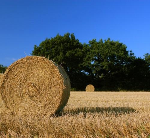 contadino-per-un-giorno-2