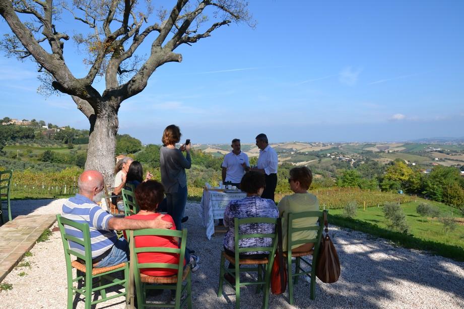 La raccolta delle olive costahotels for Raccolta olive periodo